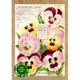 Seeds With Love Greeting Card & Seeds - Beautifully Vintage Pansy